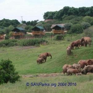 SANParks Addo Elephant Rest Camp